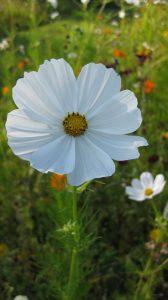 Feedbacks sind wie schöne Blumen