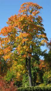 Herbstbaum_01